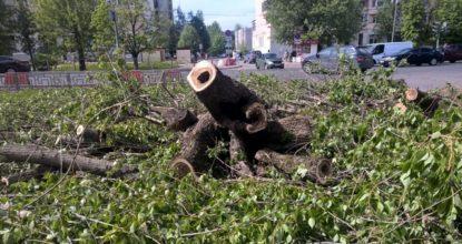 аварийные деревья