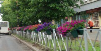 Гатчина - цветы
