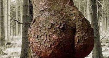 Дерево - попа