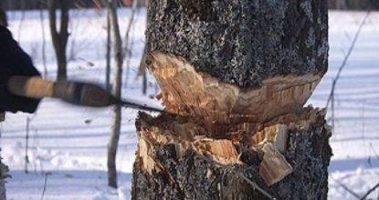 Рубка дерева
