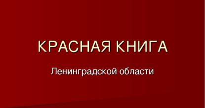 Красная книга Ленобласти