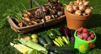 Овощи на поле