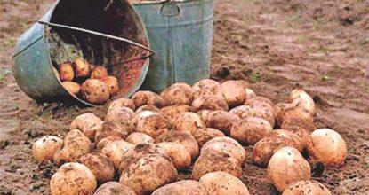 Уборка картошки