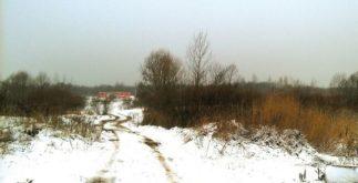 Зачий ремиз - зима